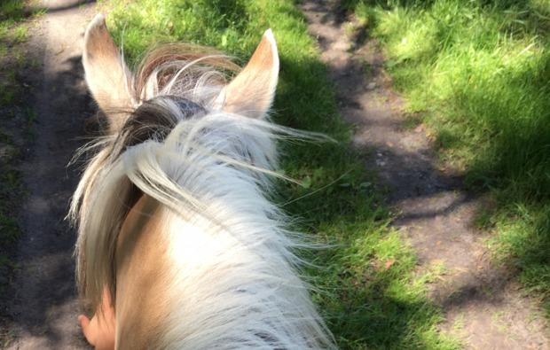 sassenburg-pferde-abenteuer-ausritt