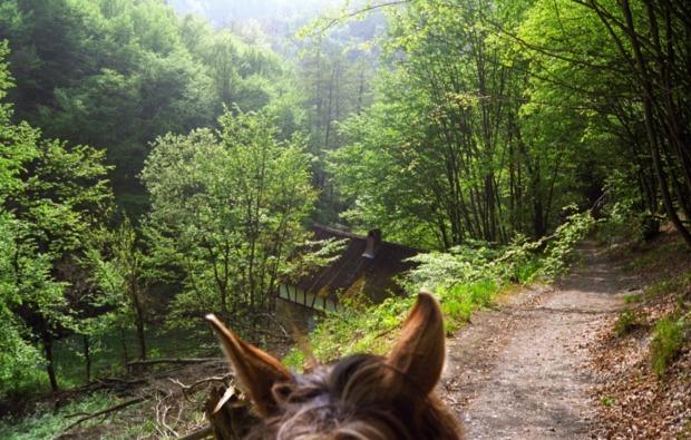 sassenburg-pferde-abenteuer-natur