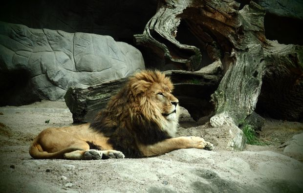 fotokurs-hamburg-lion