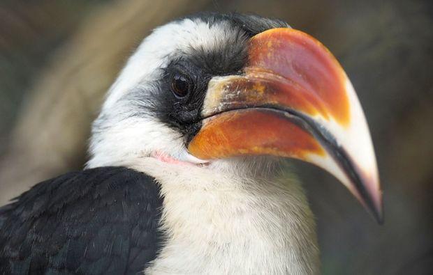 fotokurs-hamburg-vogel