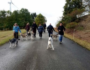 Husky Wanderung - JSMD - Twistetal Ca. 2 Stunden