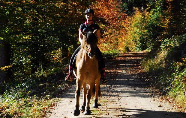 forbach-hundsbach-pferde-abenteuer-reiten