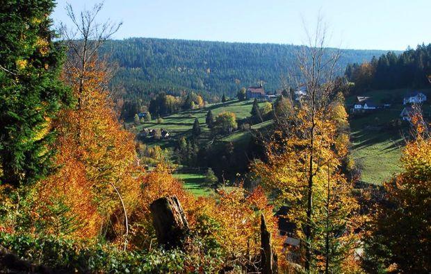forbach-hundsbach-pferde-abenteuer-wald