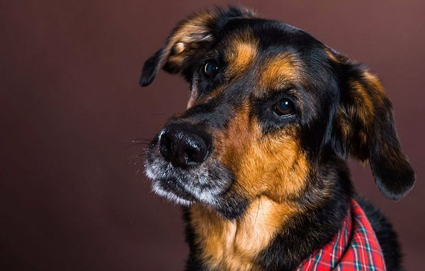 animalisches-fotoshooting-neubiberg-dog
