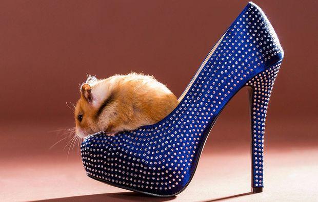 animalisches-fotoshooting-neubiberg-hamster-schuh