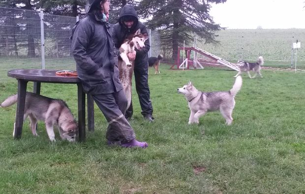 husky-trekking-goch-bg4
