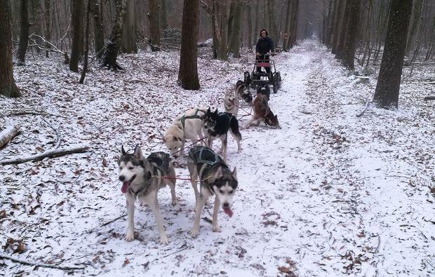 husky-trekking-goch-bg5