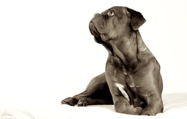 animalisches-fotoshooting-hannover