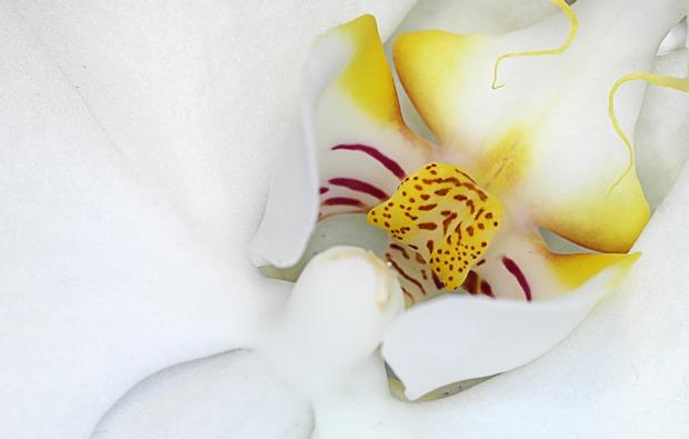 fotokurs-hattingen-orchidee