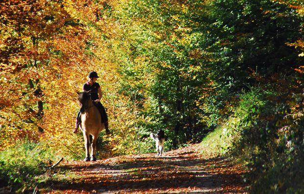 pferde-abenteuer-forbach-hundsbach-pferdereiten