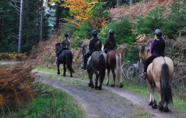 pferde-abenteuer-forbach-hundsbach-reiten
