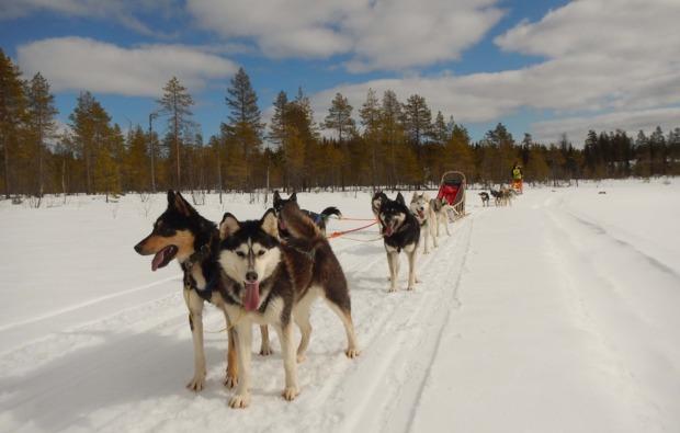 husky-abenteuer-trip-asele-outdoor