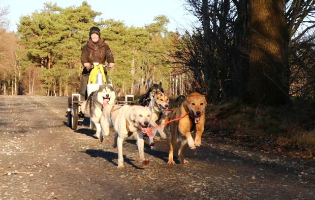 schlittenhundefahrt-stinstedt-bg2