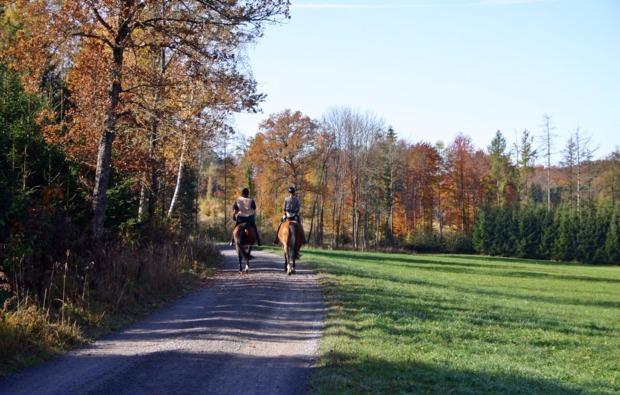 pferde-abenteuer-ernsgaden-reiten