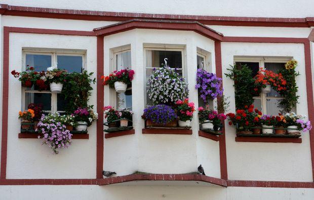 fotokurs-heidelberg-flower