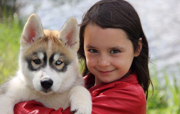 animalisches-fotoshooting-dietfurt-hunde