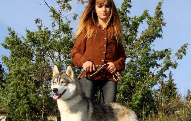animalisches-fotoshooting-dietfurt-husky