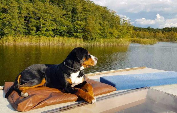 hausboot-urlaub-hund-rechlin-mueritz