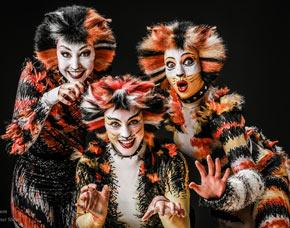 musical-dinner-cats