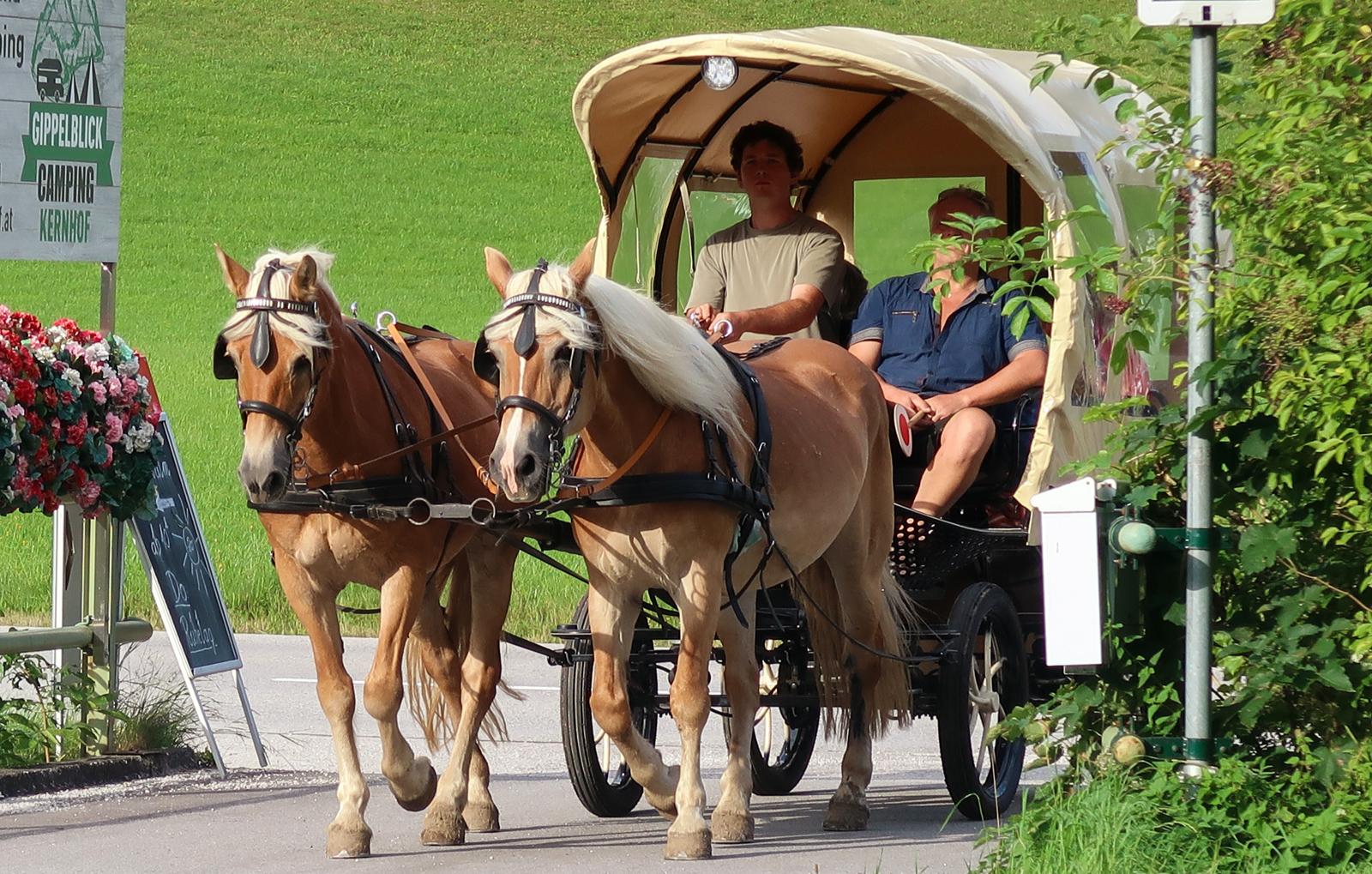 picknickfahrt-mit-kutschenwagen-bg1