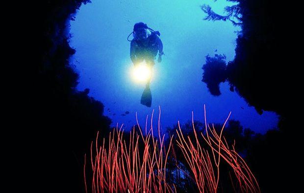 tauchkurs-freiwasser-muenchen-korallen