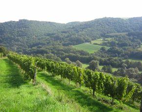 Weinbergwanderung - Walking mit Weinprobe - Nahe Schlösschen - Bad Münster am Stein-Ebernburg mit Verkostung & Picknick