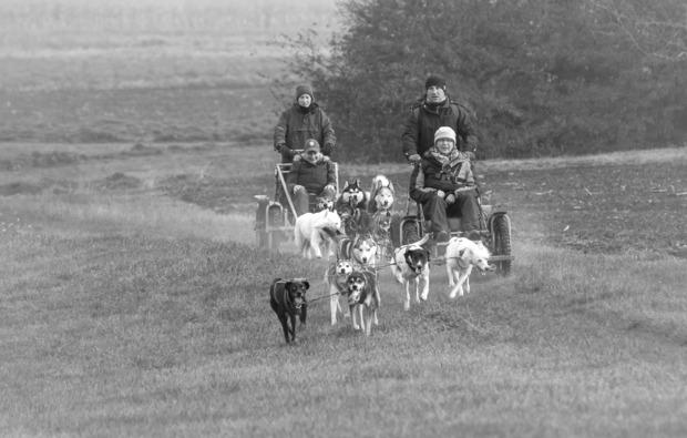 schlittenhundefahrt-schwabmuenchen-husky