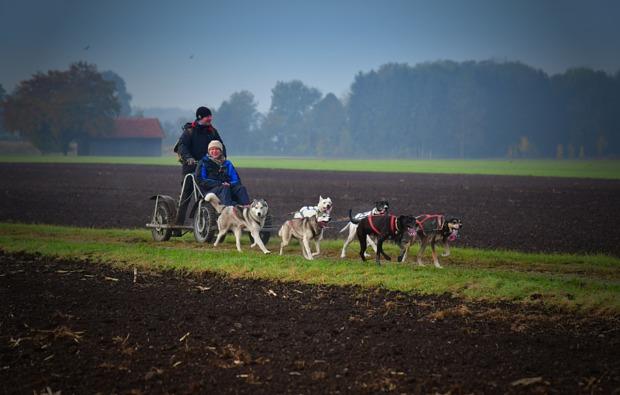 schlittenhundefahrt-schwabmuenchen-trainingswagenfahrt