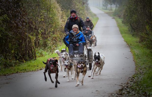 schlittenhundefahrt-schwabmuenchen-wagenfahrt