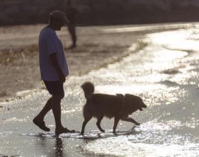 Familien-Urlaub im Bungalow mit Hund (5 Tage) - Camping Roma Capitol - Ostia Antica Camping Village Cavallino – inkl. Tagesgebühr Hund