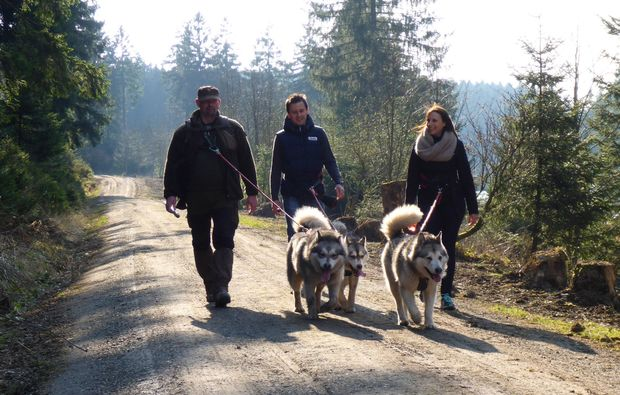 husky-trekking-heinade-schlittenhund