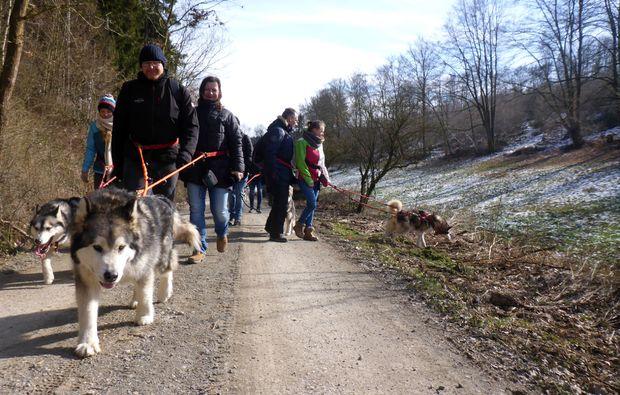husky-trekking-heinade-spazieren