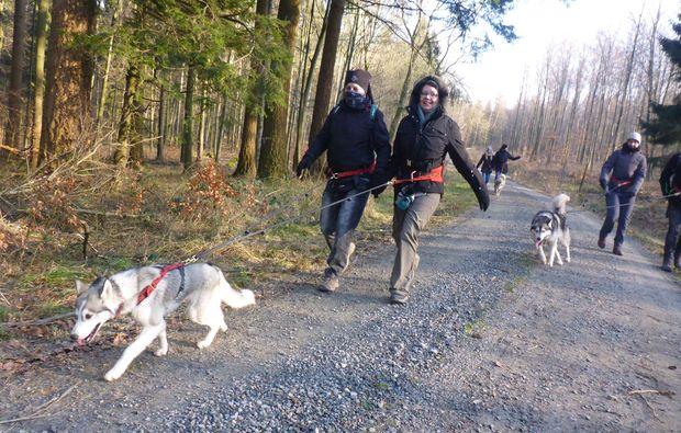 husky-trekking-heinade-spaziergang