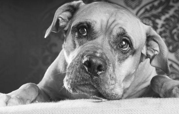 animalisches-fotoshooting-magdeburg-hund