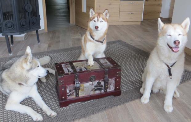schlittenhunde-workshop-kulz-huskies
