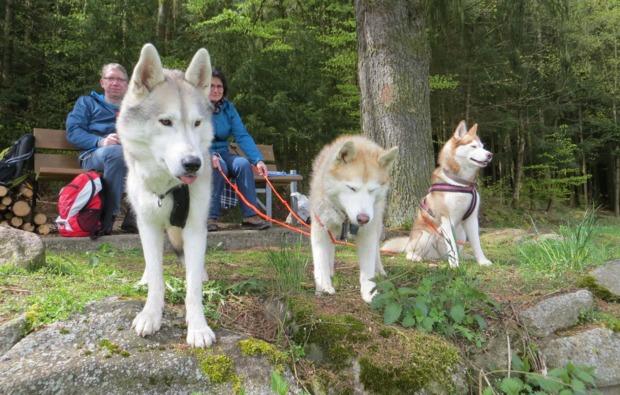 schlittenhunde-workshop-kulz-outdoor