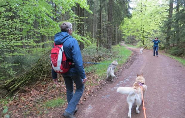 schlittenhunde-workshop-kulz-wanderung