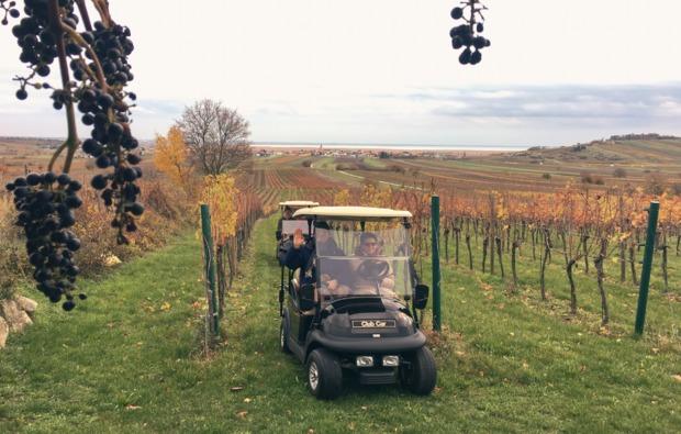 golf-car-genusstour-durch-weingaerten-1-person-bg1