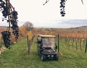 Golf Car Genusstour durch Weingärten 1 Person im Golf Car mit Verkostung & Fahrt entlang der Weingärten