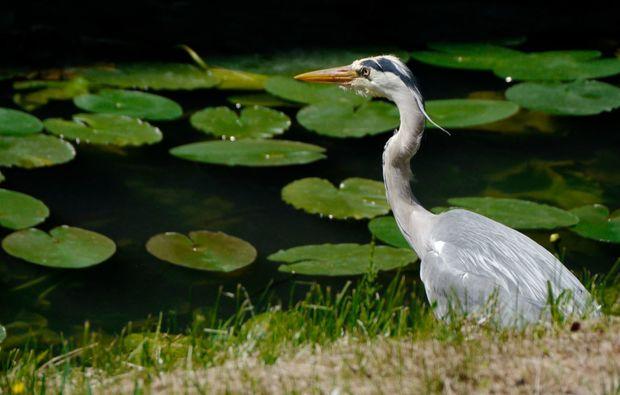 fotokurs-raesfeld-vogel