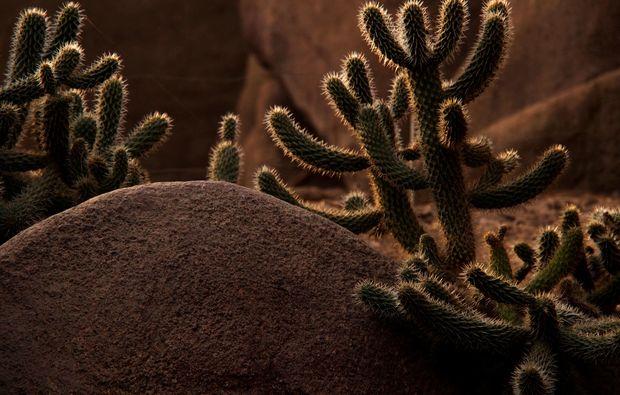 fotokurs-arnheim-kaktus
