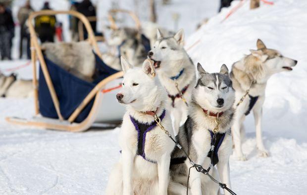 schlittenfahrt-hunde-oedwang