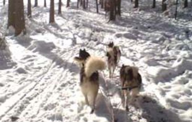 schlittenhundefahrt-oedwang-strecke