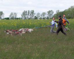 Schlittenhunde-Trekking Schlittenhunde-Trekking - 4 Stunden
