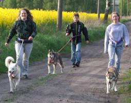 schlittenhunde-trekking-schwerin113389877581339401378