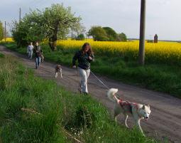 schlittenhunde-trekking-schwerin4