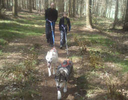schlittenhunde-trekking-schwerin5
