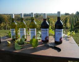 Weinseminar Göcklingen
