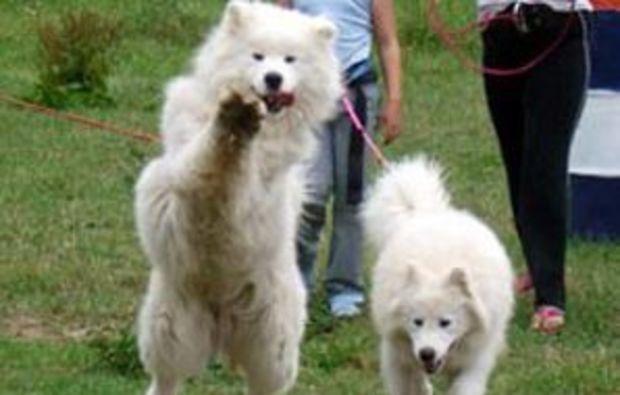 husky-trekking-quering
