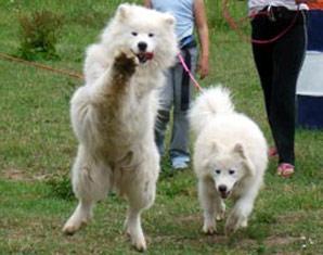 Bild Huskies & Schlittenhunde - Husky-Schlittenfahrt: Das Erlebnis, bei dem man auf den Husky kommt